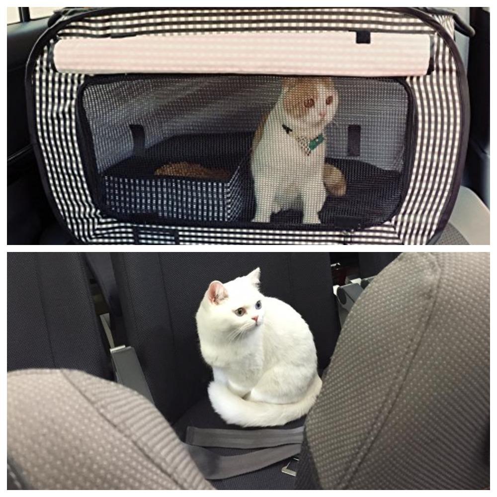 Нужно перевезти кошку в самолете - как это сделать