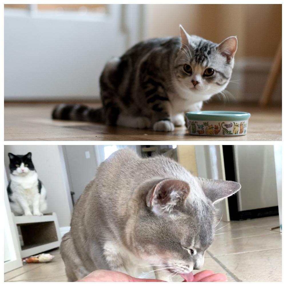 Можно ли давать рыбий жир кошкам